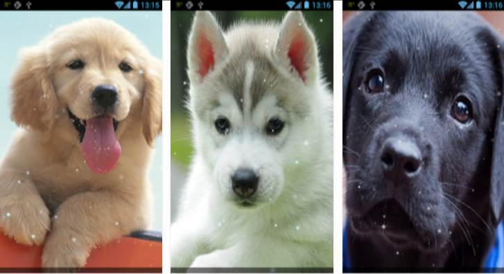 app-cachorro-papel-parede-animado